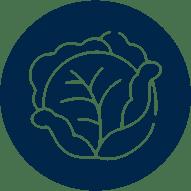 icone cultura brassicas
