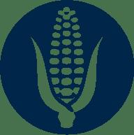 icone cultura milho